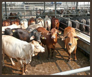 Recondition Pen