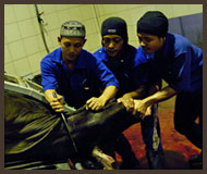 Slaughter Process